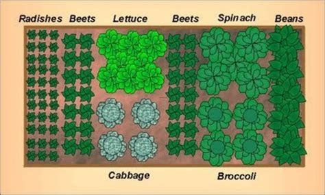 garden designs and layouts from the home garden gardening