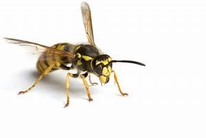 Welchen Geruch Mögen Wespen Nicht : mit kupfer wespen vertreiben so geht 39 s ~ Articles-book.com Haus und Dekorationen