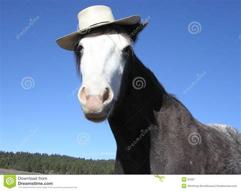 horse  hat stock image image  equine horse funny