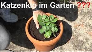 Hilfe Im Garten : coleus canin hilfe gegen katzenkot im garten katzen im ~ Lizthompson.info Haus und Dekorationen