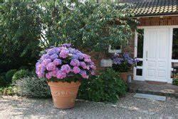 Rosen Im Topf überwintern : terrassenpflanzen berwintern 3 tipps ~ Orissabook.com Haus und Dekorationen