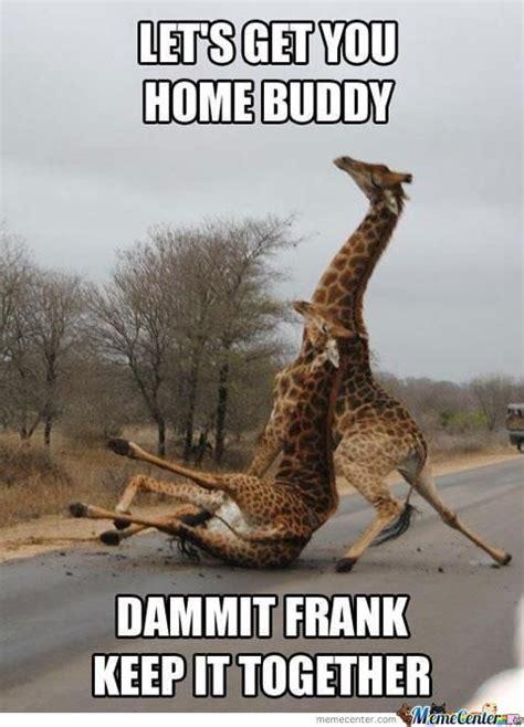 Meme Giraffe - 20 most funniest giraffe meme pictures and photos