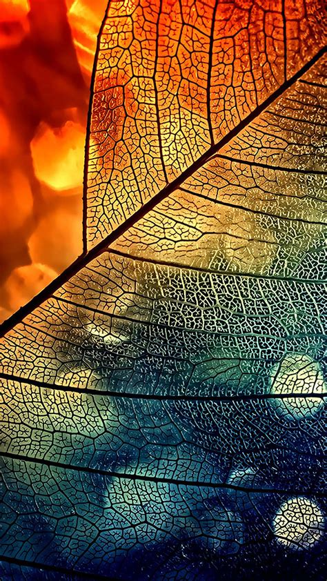 Android Phone Wallpaper Hd Abstract by Bokeh Abstract Transparent Leaf Blue Orange Android