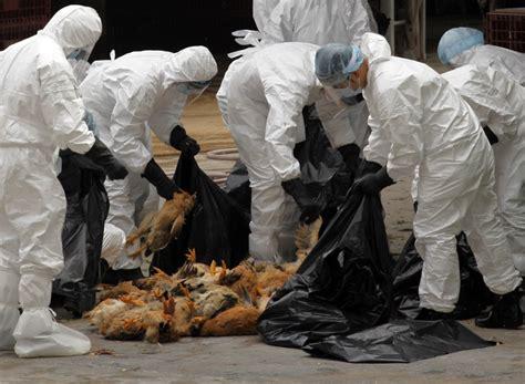 hong kong slaughter  chickens  bird flu virus