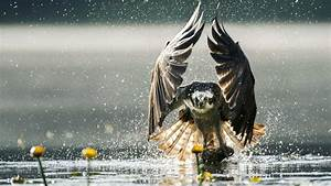 Wildlife Photographer of the Year 2019 - Arts Agenda Executive Search - The MBS Group