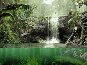 Fascinating Rainforest Screensaver For Windows