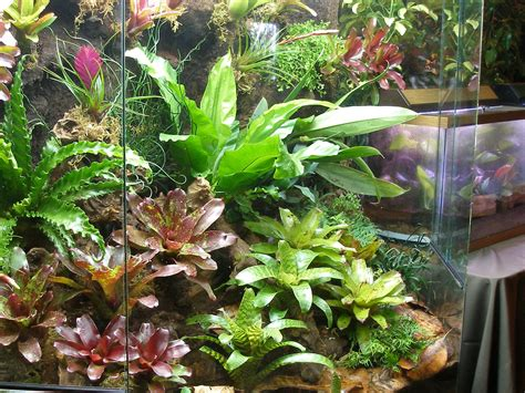 tropical terrarium  vivarium creation amphibian care