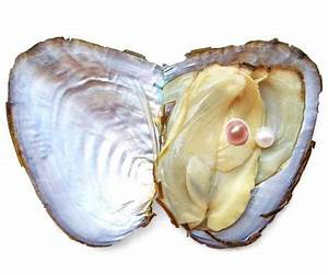 Pearl Oyster - 5-6mm Undrilled Pearl and Dyed 7-8mm Button ...