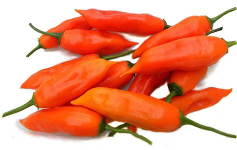 aji amarillo the peruvian yellow pepper main character in peruvian cuisine