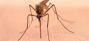 Mittel Gegen Mücken : finden sie das richtige mittel gegen m cken ~ Frokenaadalensverden.com Haus und Dekorationen