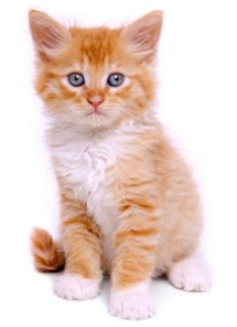 Cat Names Place  Cute Cat Names