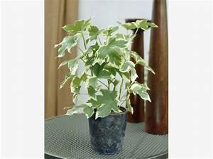 Pflanze Für Dunkle Räume : 11 zimmerpflanzen f r dunkle ecken zimmerpflanzen ~ A.2002-acura-tl-radio.info Haus und Dekorationen