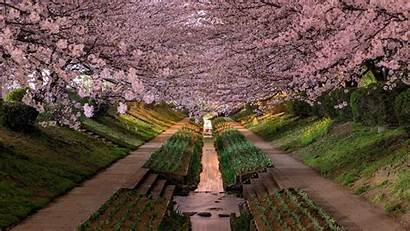 Desktop Japanese Wallpapers Cherry Japan Blossoms Definition