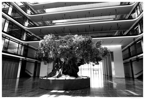 Olivenbaum Im Haus by Der Olivenbaum Foto Bild World S W Deutschland