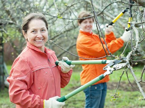 apfelbaum schneiden zeitpunkt apfelbaum schneiden