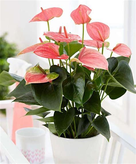 Arredare con i fiori freschi la casa è un modo per renderla allegra e colorata. 10 piante di tendenza per arredare casa con un tocco green   Piante da appartamento, Pianta ...