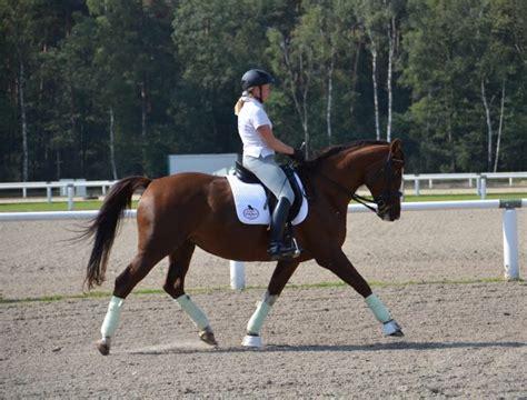 muskelaufbau beim pferd  gehts los gelassencom