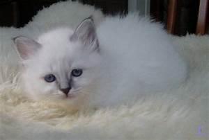 Welche Katzenrasse Passt Zu Mir : welche katzenrasse passt zu mir seite 1 ~ Lizthompson.info Haus und Dekorationen