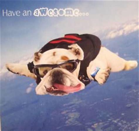 funny skydiving  birthdays  pinterest