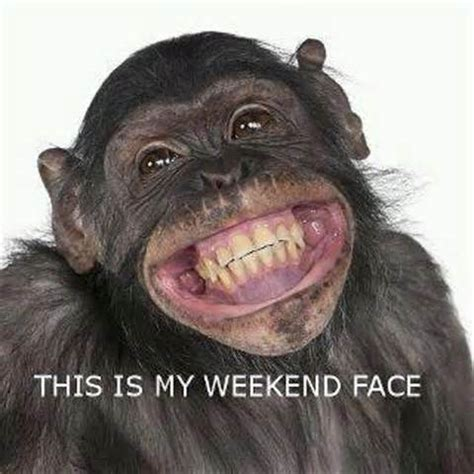 Monkey Face Meme - 12 most funny monkey pictures