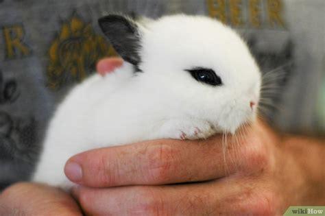 tenere  braccio  coniglio  passaggi