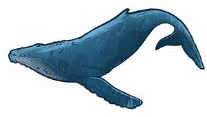 Baby Blue Whale Clip Art | Clipart Panda - Free Clipart Images