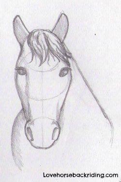 draw  horse head tutorial easy  cartoon horse