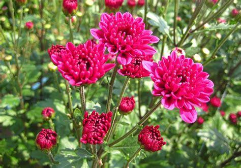 ไม้ดอกไม้ประดับมุ่ง AEC มีโอกาสเป็นเงินเป็นทอง