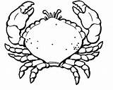 Crab Coloring Pages Printable Hermit Clipart Line Popular Getcoloringpages Clipartmag Drawing Results sketch template