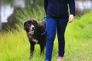 saying goodbye best buddy dog euthanasia