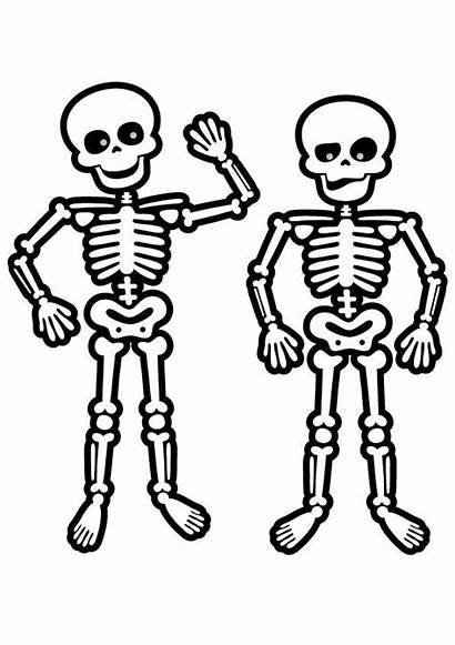 Skeleton Coloring Pages Human Face Skeletons Drawing