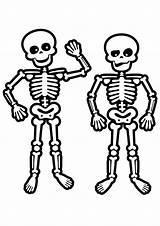 Skeleton Coloring Pages Human Face Skeletons Drawing Skeletal Skulls Printable Easy System Preschool Toddler Anatomy Colouring Skull Cartoons Getcolorings Preschoolers sketch template