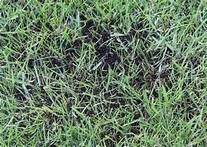 Moos Im Rasen Beseitigen : so bek mpfen sie moos im rasen tipps und vorbeugema nahmen ~ A.2002-acura-tl-radio.info Haus und Dekorationen