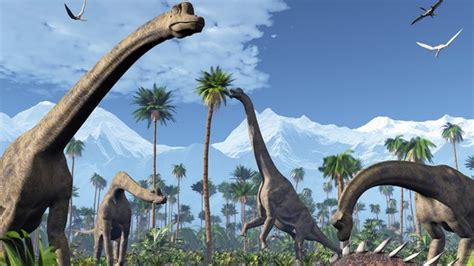 Ostrich Necks Give Clues To Dinosaur Flexibility