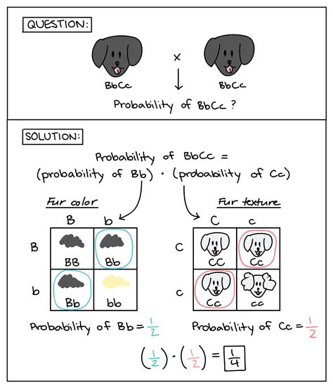 addition rule of probability worksheet answers section 4