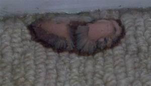 signs of mold in carpet – Meze Blog