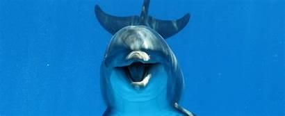 Dolphin Dolphins Destin Oahu Cruises Fl Swimming