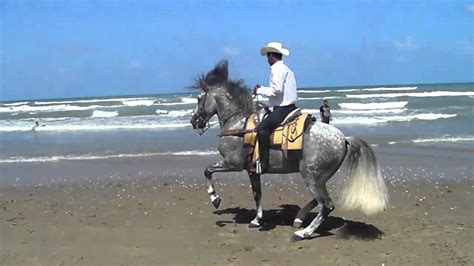 horse dancing island south padre riding
