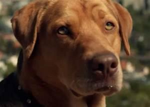White God movie: A dog uprising creates empathy and a ...