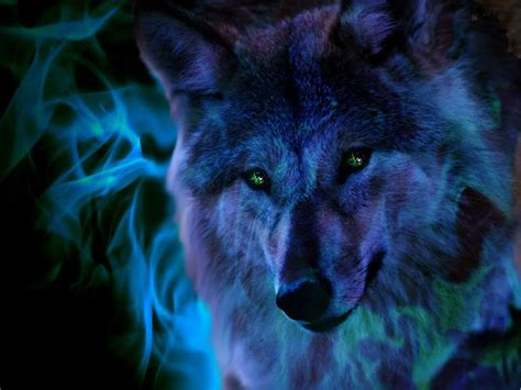 Blue And Purple Wolf Wallpaper by The Anubian S Wolf Pack Images Killerwolfpack Hd Wallpaper