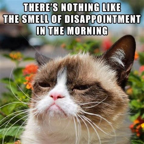 Grumpy Cat Good Morning Meme - 10 new grumpy cat memes