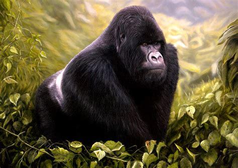 Silverback Gorilla Vs African Lion