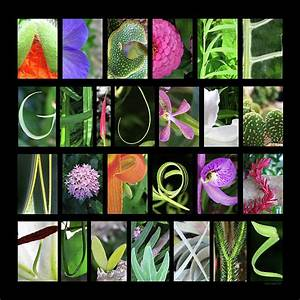 alphabet in nature With letters nature photography art