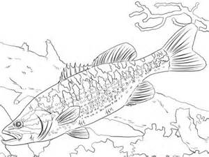 guadalupe bass coloring page super coloring