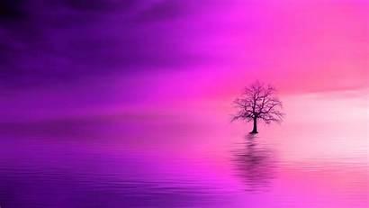 Lonely Tree Horizon 4k Wallpapers 1080p Hdtv