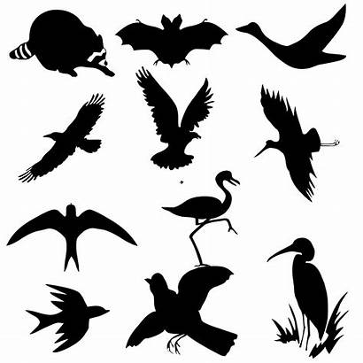 Birds Flying Silhouettes Bird Icon Silhouette Pixabay