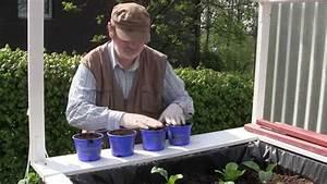 Gurken Im Hochbeet : gurken tomaten pflanzen zucchini s en gew chshaus hochbeet perfekt film 3 youtube ~ Orissabook.com Haus und Dekorationen