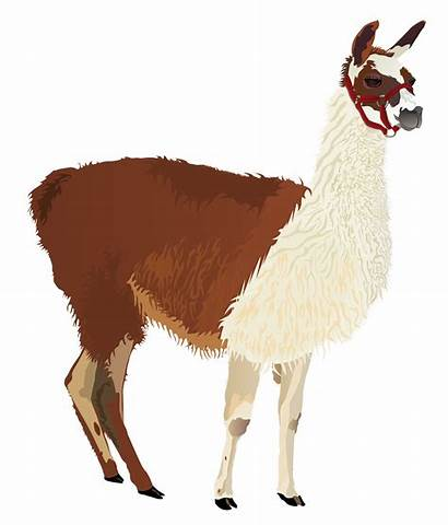Clipart Alpaca Zelda Bow Arrow Llama Clip