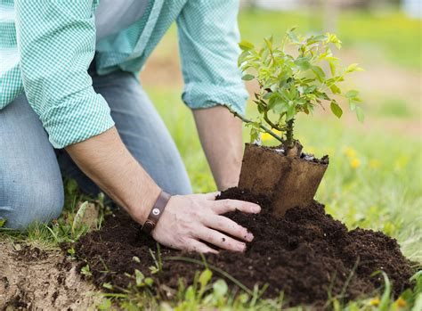 how to plant a tree how to plant a tree