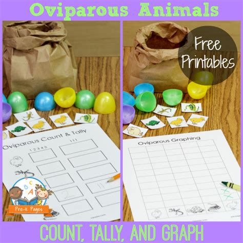 learning about eggs 384 | printable oviparous animal hunt game